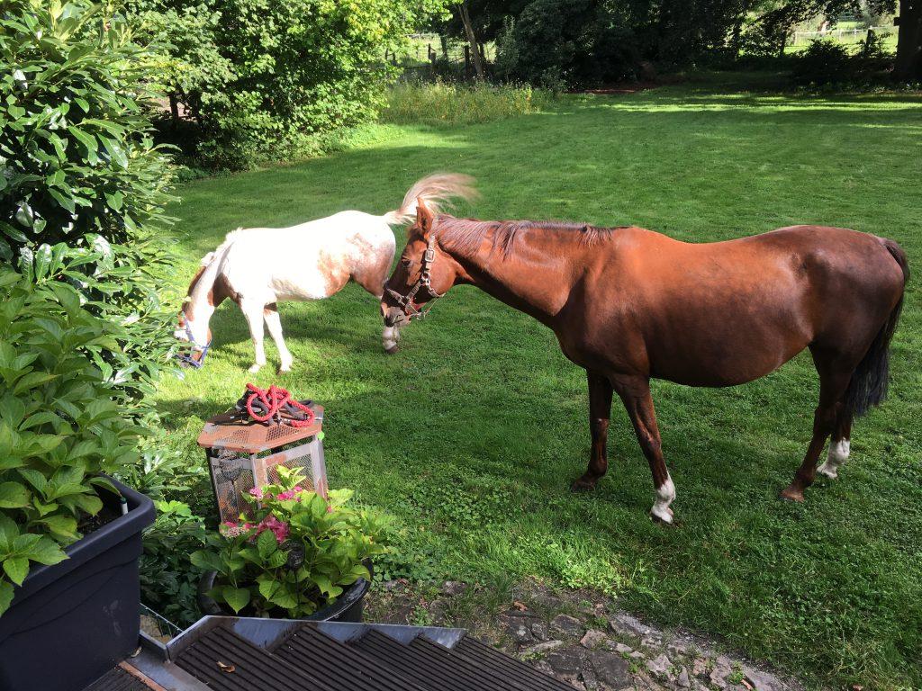 Tim Mithöfer Pferde Garten